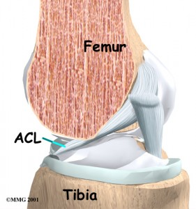 knee_acl_anatomy01