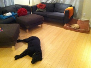 sleeping dogs and cat