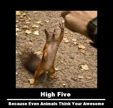 etc guy squirrel high five