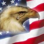 eagle409