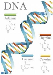 DNA23